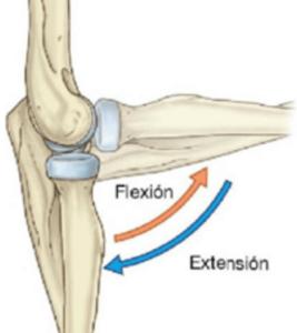 Flexión y extensión del codo