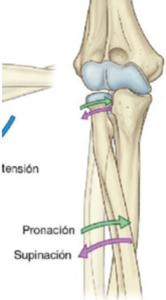 Pronación y supinación de antebrazo